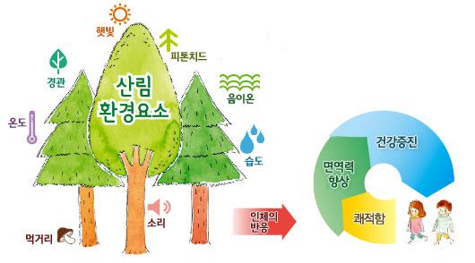 산림환경요소(햇빛,피톤치드,음이온,습도,소리,먹거리,온도,경관)인체의반응은 면역력향상,건강증진,쾌적함