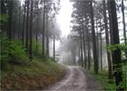 편백나무가 우거진 장성 치유의 숲길 전경