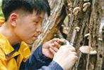 홍릉시험림내 참나무시들음병 치료시험
