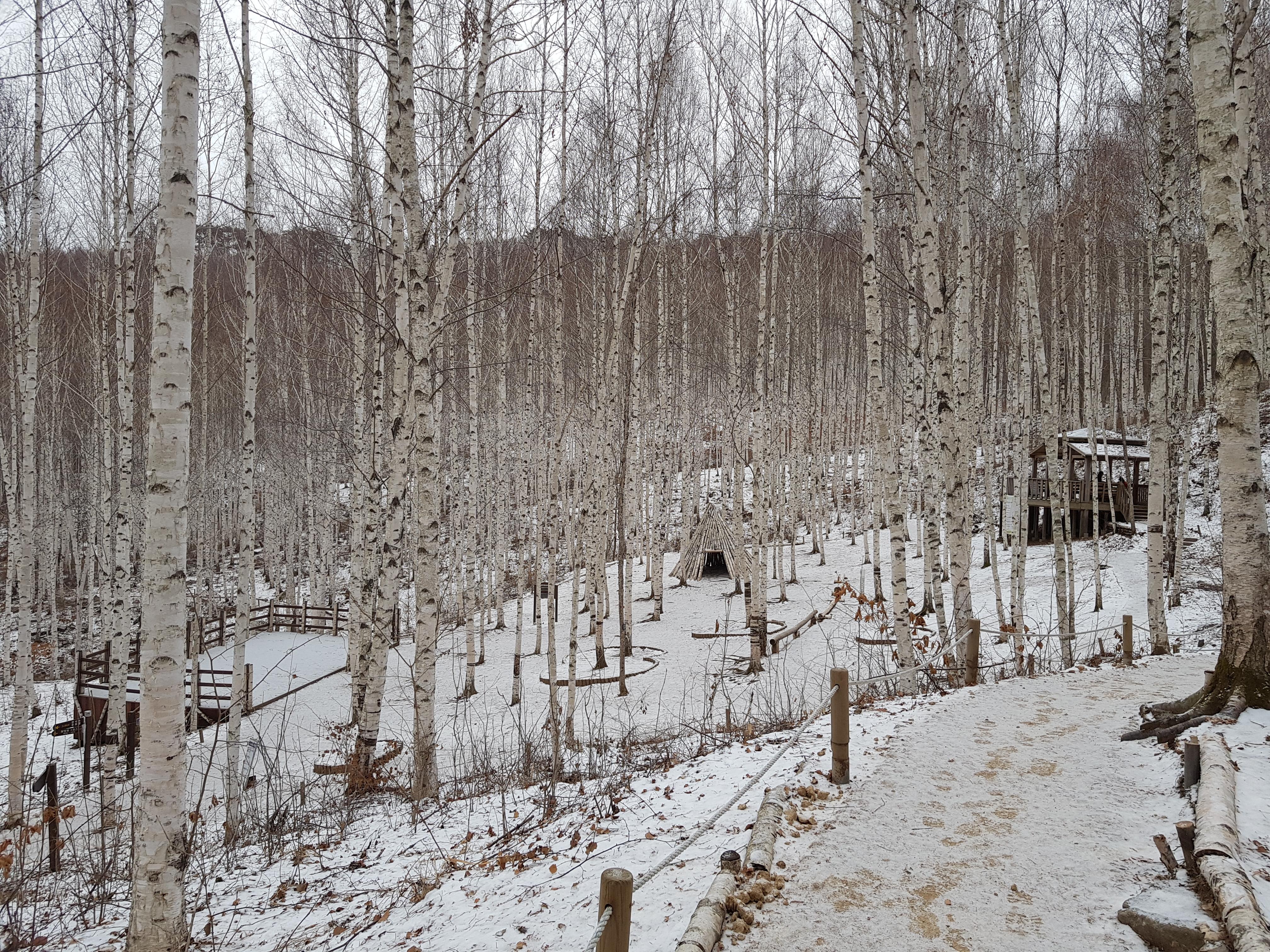 빅데이터가 말하는 인제 자작나무 숲의 인기 비결 이미지2