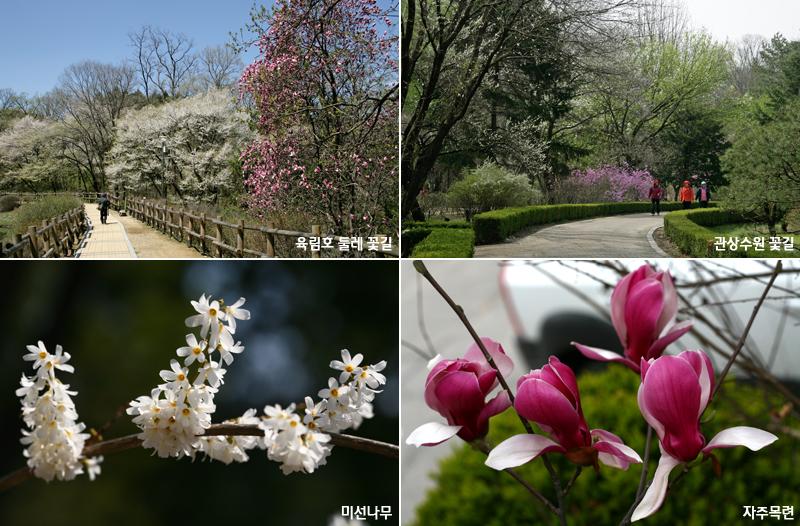 국립수목원으로 봄꽃 활짝 핀 나무 보러 오세요! 이미지1