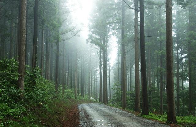 산림복지법 본격 시행... 국민체감 녹색복지 기대 이미지1