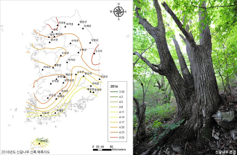 국립수목원, 신갈나무 신록(新綠)지도 국내 최초 작성 이미지1