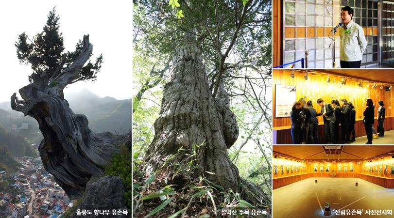 최대 2,500년 된 우리 땅의 '산림유존목' 사진전시회 개최 이미지1