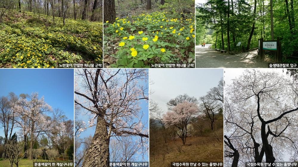 노란 꽃 만발한 야생화 군락, 국립수목원에 활짝 이미지1