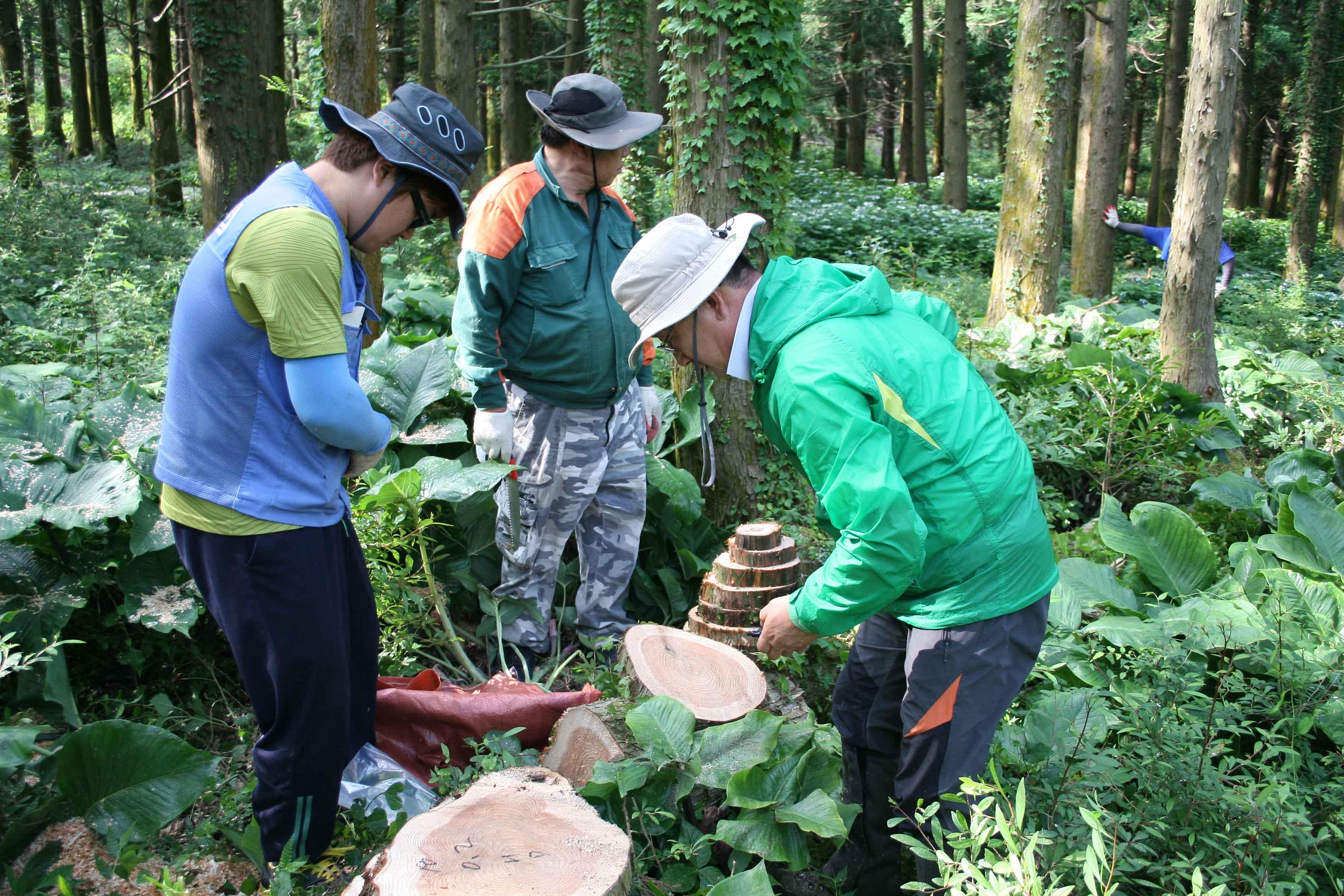 베어낸 나무, 원목으로 이용 가능한 양은 얼마? 이미지1