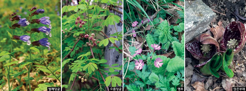 국립수목원 숲생태관찰로 따라 연이어 봄꽃 향연 이미지1