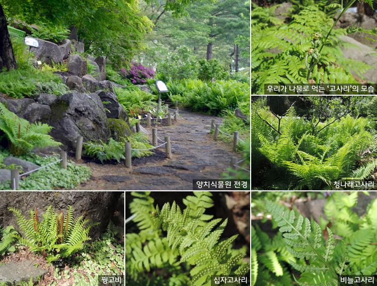 꽃도 씨도 없는 식물? 꽃보다 아름다운 양치식물 보러 오세요! 이미지1